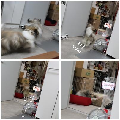 cats2009-09-14-04.jpg