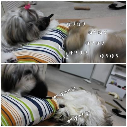 cats2009-09-15-02.jpg