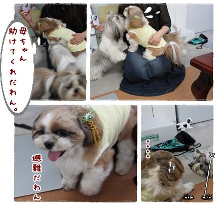 cats2009-09-16-02.jpg