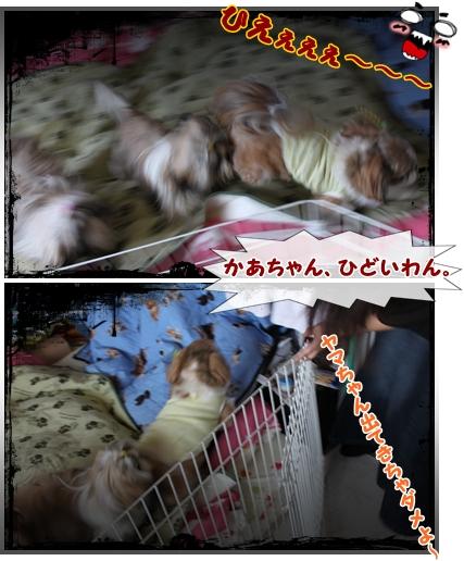 cats2009-09-17-01.jpg