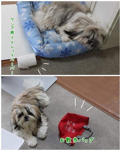 cats2009-09-19-01.jpg