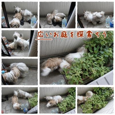 cats2009-09-19-04.jpg