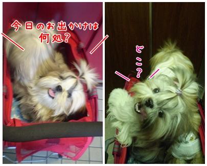 cats2009-09-20-01.jpg