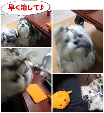 cats2009-09-22-02.jpg