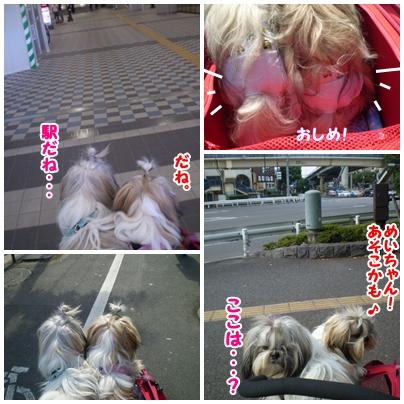 cats2009-09-23-01.jpg