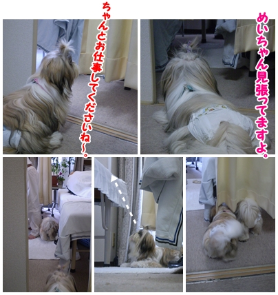 cats2009-09-23-02.jpg