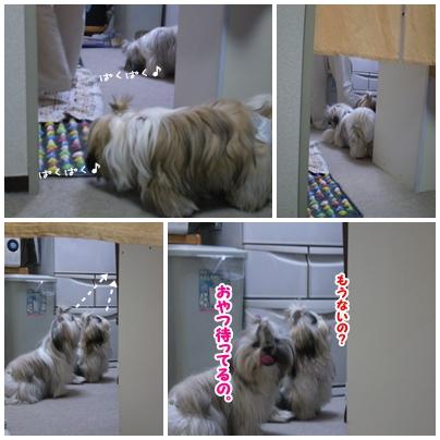 cats2009-09-23-03.jpg