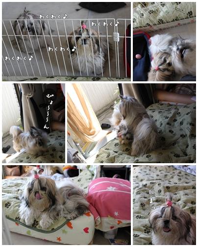 cats2009-09-24-02.jpg