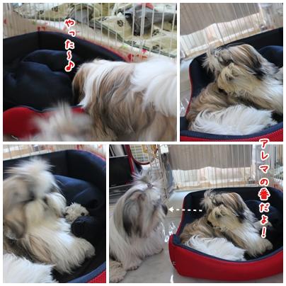cats2009-09-25-02.jpg