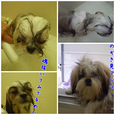 cats2009-09-25-05.jpg