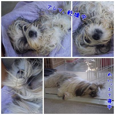cats2009-09-25-06.jpg