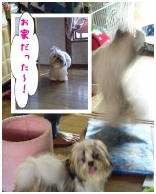 cats2009-09-26-03.jpg