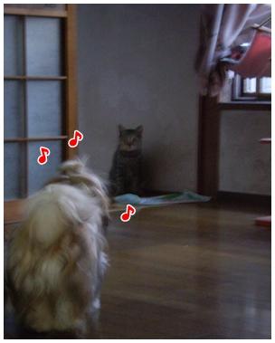 cats2009-09-26-04.jpg