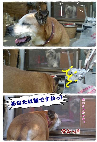 cats2009-09-26-07.jpg
