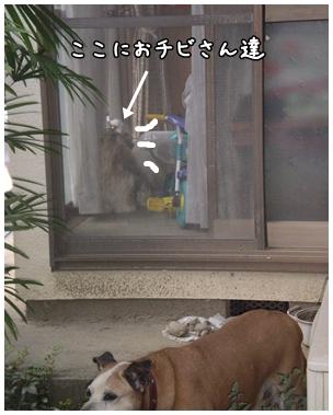 cats2009-09-30-11.jpg