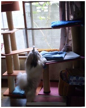 cats2009-09-30-12.jpg