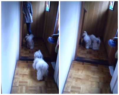 cats2009-10-06-01.jpg