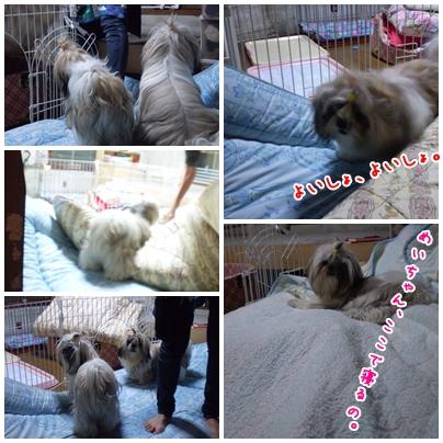 cats2009-10-06-02.jpg