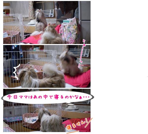 cats2009-10-06-03.jpg