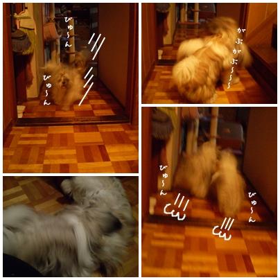 cats2009-10-06-07.jpg