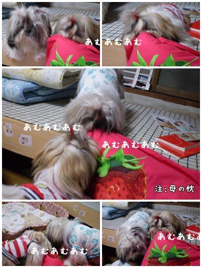 cats2009-10-08-01.jpg