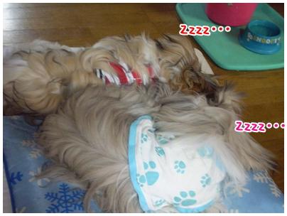 cats2009-10-08-03.jpg