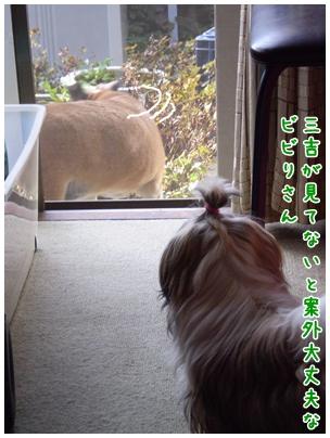 cats2009-10-09-04.jpg