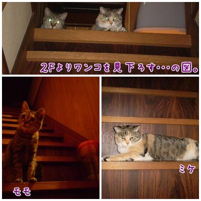 cats2009-10-10-01.jpg