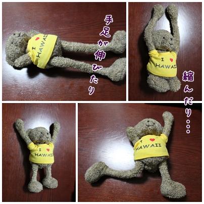 cats2009-10-11-01.jpg
