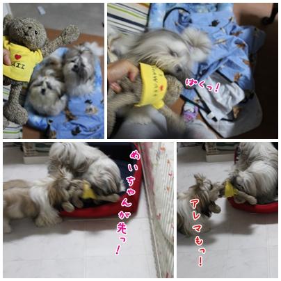 cats2009-10-11-02.jpg