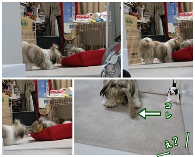 cats2009-10-11-07.jpg