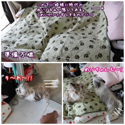 cats2009-10-12-01.jpg