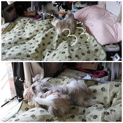 cats2009-10-12-02.jpg