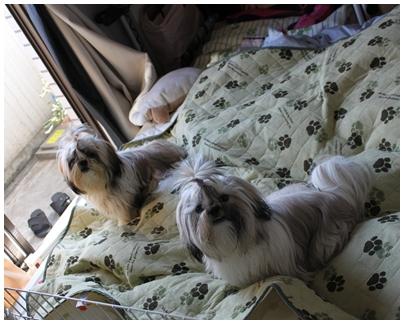 cats2009-10-12-04.jpg