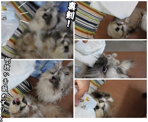 cats2009-10-13-02.jpg