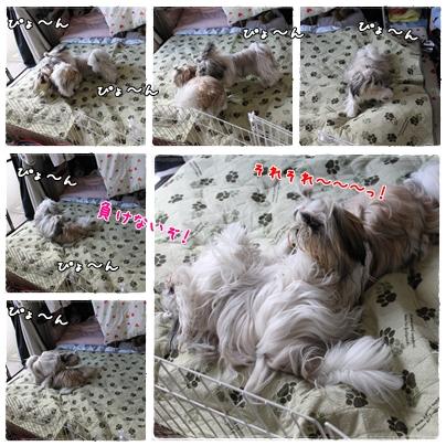 cats2009-10-14-01.jpg