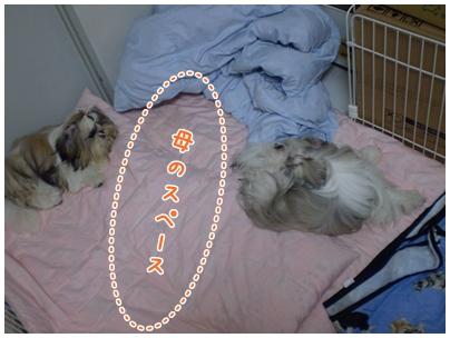 cats2009-10-15-04.jpg