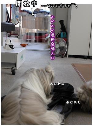 cats2009-10-16-04.jpg