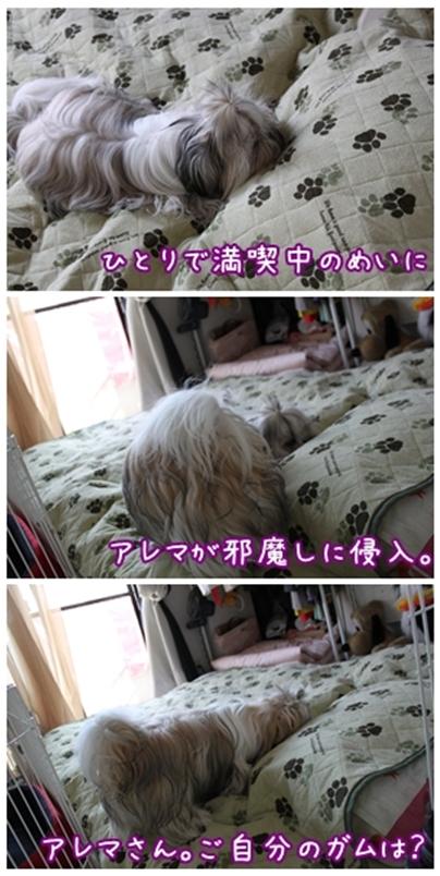 cats2009-10-17-14.jpg