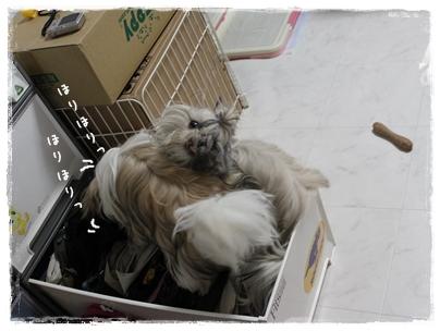 cats2009-10-19-04.jpg