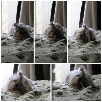 cats2009-10-21-04.jpg