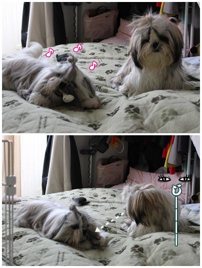 cats2009-10-21-05.jpg