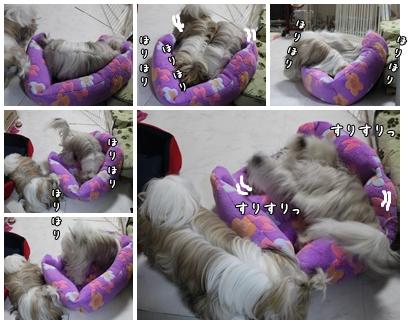 cats2009-10-22-01.jpg