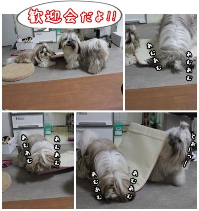 cats2009-11-03-03.jpg