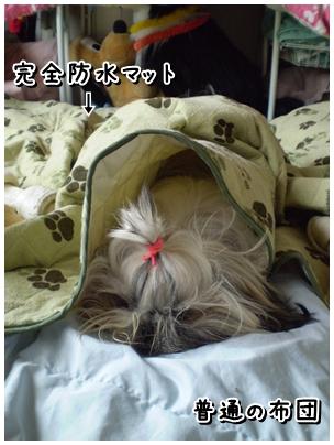 cats2009-11-09-01.jpg
