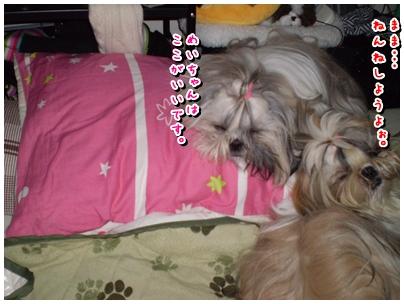cats2009-11-10-05.jpg