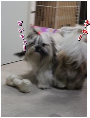 cats2009-11-12-04.jpg