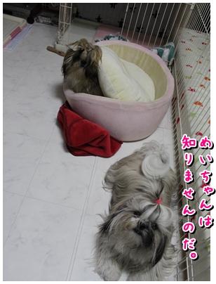 cats2009-11-12-08.jpg