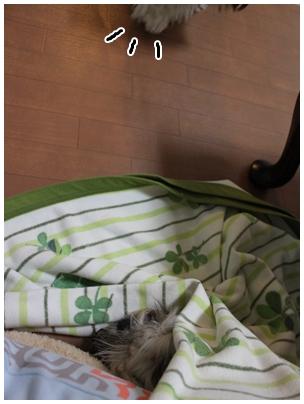 cats2009-11-12-14.jpg