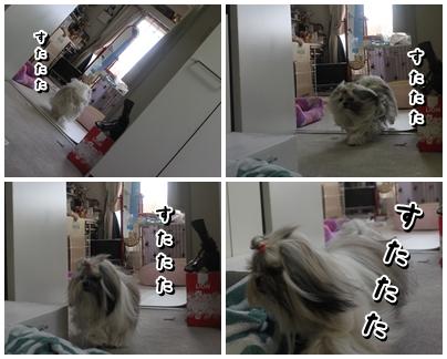 cats2009-11-14-07.jpg